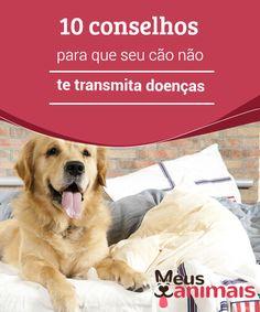 Conselhos para que seu cão não te transmita doenças  A #transmissão de #doenças entre #cães e pessoas é muito comum; para evitá-la, hábitos de #higiene devem ter a importância que merecem. #Saúde
