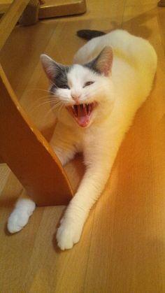 #neko #cat (via Twitter)