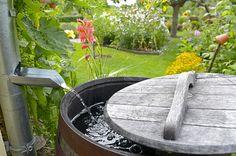 Dešťová voda, kterou svedete do sudu nebo do nádrže, vystačí kzavlažování menší zahrady či trávníku. Komplexní využití dešťové vody vrodinném domku pak podle zkušenosti snižuje náklady za odebíranou pitnou vodu údajně na polovinu. Navíc ušetříte ina stočném.