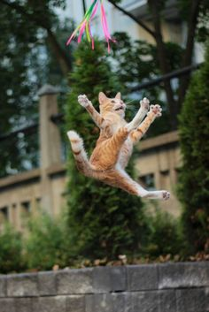 Usually our feline friends can channel the spirits of their jungle-dwelling, tree-climbing ancestors to make almost gravity-defying jumps. These are not those cats. Check out these funny videos of cats who tried to jump, but failed. I Love Cats, Crazy Cats, Cool Cats, Funny Cats, Funny Animals, Cute Animals, Animals Images, Cute Kittens, Cats And Kittens