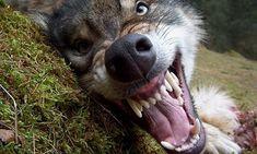 Ola się śmieje: Człowiek człowiekowi wilkiem
