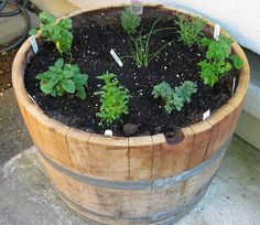 half wine barrel garden | Always wanted to do a herb garden in a half wine barrel!