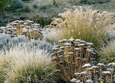 All seasons Make sure your planting plan gives winter beauty too www.my-garden-school.com/courses