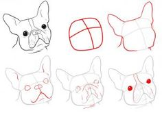 How to Draw a Boston Terrier, Step by Step, Pets, Animals, FREE Online Drawing Tutorial, Added by Dawn, June 22, 2011, 8:52:13 pm