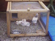 plans for area of broody hens - Google Search