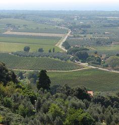 Wineries in Bolgheri