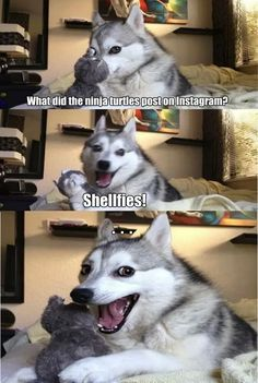 Husky dogs love lame jokes… - Funny Stuff