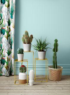 Cactus decoration, pots