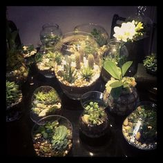 "www.idiomboutique.com  I love to create terrariums w/ special treasures I have collected on the beach, hikes, etc. Always have a collection of them at idiom ""for sale,"" and they look very interesting immersed w/ our pocketbooks, jewelry, shoes, etc.  It all works together!"