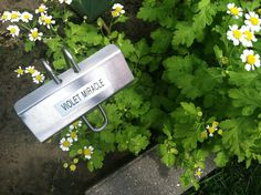 Plant Markers, Garden Markers, Identify Plant, Garden Labels, Herbs, Plants, Brother, Herb, Plant