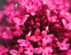 """Check out new work on my @Behance portfolio: """"Botanical Photography"""" http://on.be.net/1Mzn95i"""
