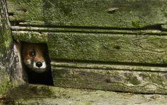 Kai Fagerström - The House in the Woods une-maison-abandonnee-dans-les-bois-envahie-par-des-dizaines-d-animaux-en-tous-genres21