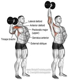 Dumbbell one arm overhead press. A unilateral compound push exercise. Main muscles worked: Anterior Deltoid Lateral Deltoid Supraspinatus Triceps Brachii Middle and Lower Trapezii Serratus Anterior Clavicular (upper) Pectoralis Major Obliques Psoa Fitness Workouts, Fun Workouts, At Home Workouts, Fitness Hacks, Shoulder Day, Shoulder Muscles, Dumbbell Shoulder, Shoulder Workout Dumbells, Overhead Press