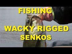 5 Tips For Fishing A Wacky Rig Senko   Bass Fishing – Fishingo