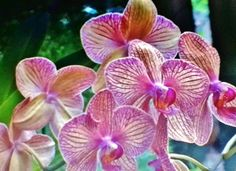 Orchid World - Barbados