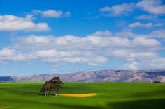 A Beautiful Day in the Farmlands in Overberg, South Africa Photo by hougaard Green Fields, Spring Is Here, Farm Life, Beautiful Day, Worlds Largest, Find Image, South Africa, To Go, Sky