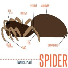 Do you know about spiders? Learn more about spiders and how to get rid of them with a home warranty.
