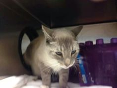 What a sweet. Boy....needs rescue ASAP. Visit pets on deathrow on facebook Tampa URGENT.