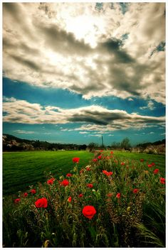 Sky Says.Gorgeous don't worry the clouds will pass the flowers are blooming Life Is Beautiful, Beautiful Places, Beautiful Flowers, Sun Worship, Sky And Clouds, Big Sky, Pretty Pictures, Amazing Photography, Places To See