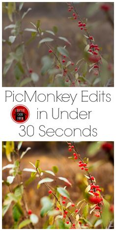 How To Correct Photos With Picmonkey In Under 30 Seconds