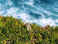 visitar san diego San Diego, Mountains, Nature, Travel, United States, Adventure, Cities, Beach, Viajes