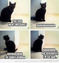 The Dog Went Missing? Silly Cat Is Gloating.
