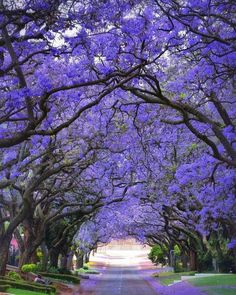 Beautiful South Africa #tourismstrong ✅ 𝑰𝒏𝒃𝒐𝒙 𝒖𝒔 𝒇𝒐𝒓 𝑨𝑴𝑨𝒁𝑰𝑵𝑮 😎 𝒉𝒐𝒍𝒊𝒅𝒂𝒚𝒔 𝒂𝒏𝒅 𝒘𝒆𝒆𝒌𝒆𝒏𝒅 𝒈𝒆𝒕𝒂𝒘𝒂𝒚𝒔 ✅ Hit 👊 Like 👍 if you Love ❤️ to travel ✈️ #leisureonlayby #smartestwaytotravel #layby #interestfree #holiday #vacation #travel #weekend #lolnow #lol 𝑳𝒊𝒗𝒆 𝒂 𝒍𝒊𝒕𝒕𝒍𝒆 𝑳𝑨𝑹𝑮𝑬𝑹! Beautiful World, Beautiful Places, Tree Tunnel, Colorful Trees, Travel And Tourism, Travel Route, Vacation Travel, Trees To Plant, Beautiful Landscapes