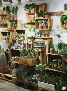 Magnificent Small Urban Garden Ideas You'll Want For Your Living Space - HomelySmart - Garden Care, Garden Design and Gardening Supplies Garden Shop, Home And Garden, Deco Cactus, Decoration Plante, Room With Plants, Deco Floral, Plant Decor, Plant Wall, Houseplants