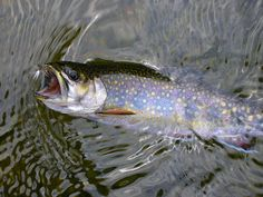 Harbor Springs, MI - Reel Waters : Fly Fishing in Northern Michigan overnight packages Gone Fishing, Best Fishing, Fishing Reels, Fishing Lures, Fishing Stuff, Fly Fishing Basics, Trout Fishing Tips, Fishing Guide, Salmon Fishing