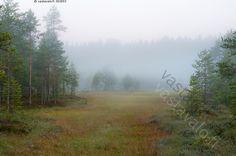 Suo ennen auringonnousua - aamu aikainen maisema suo suomaisema mänty männyt…