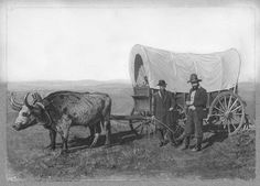 conastoga wagons | Covered wagon pulled by an ox. - Kansas Memory