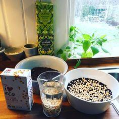 Odla ärtskott inomhus på bästa och enklaste vis - Leva Hållbart Bra Hacks, Sprouts, Greenery, Breakfast, Health, Kitchen, Plants, Gardening, Drawing