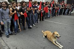 RIP Loukanikos, the fearless Riot Dog of Athens, who stood up to marauding police and did not shrink from rubber bullets or tear gas...