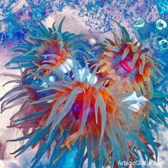 Beautiful coral reefs (Sulawesi island, Indonesia) | Creative World550 x 550 | 153.3 KB | www.artisticglobe.com