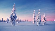 The polar night or Kaamos is a magical period in Lapland. This is what the heart of winter looks like Winter Szenen, Winter Horse, Winter White, Winter Travel, Lappland, Polar Night, Christmas Getaways, Twilight Sky, Lapland Finland