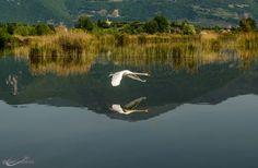 Cigno by FotoBrescia Manzari Domenico on 500px