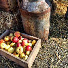 Lantliv i Vitt ★ Autumn Fall ★Höst och mycket äpplen