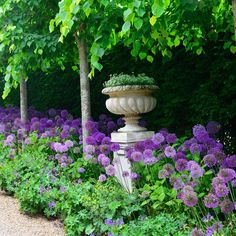 Allium (prydløg) is such a great plant, which I grow in a lot of places in the…