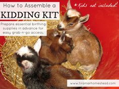 How to Assemble a Kidding Kit (for Goat Birth) - Tiramar Farms Homestead #goats…