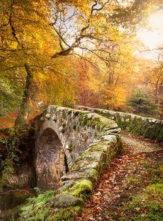 Beautiful Autumn! Love the stone bridge, seems so quaint! <pin by Diane Sloan on FALL>