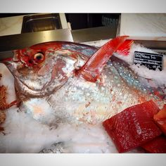 Eataly today by the kingfish  #eataly #smeraldo #king #fish #good #food #i_love_photo #iphone5 #colors #PesceRe #fish_market #peso #weight #quaranta #forty #tumblr #instagram #foursquare #pinterest #twitter #facebook #phonto #followers #like #big #day