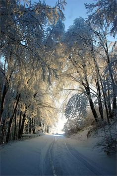 A Beautiful Snowy Road with Trees