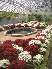 City of Cleveland greenhouse...we love to spend chilly days in this warm sanctuary...even a little picnic table inside and FREE