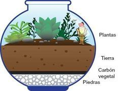 Terrarium for kids. Drawing showing the layers of rocks, charcoal, and soil in the terrarium, along with plants, and a small garden gnome. Small Garden Gnomes, Garden Plants, Indoor Plants, House Plants, Air Plants, Hanging Plants, Fairies Garden, Indoor Herbs, Garden Urns