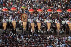 Thrissur pooram. - Kerala, India http://www.androidinfosys.com/