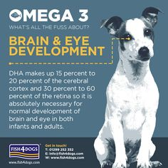 Fish4Dogs is brain food for puppies!  The brain is around 60% fat and 30% DHA Omega 3 fats.  The retina is 50% DHA Omega 3. A good source of Omega 3 is always important but never more so than during the critical growth stages.  A fish rich diet – with its high levels of EPA and DHA Omega 3 is an ideal diet for growing puppies as a good quality protein source forms the key building block of skin, coat, muscle, brain and internal organs.