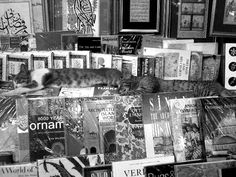I gatti e i libri (Istanbul)