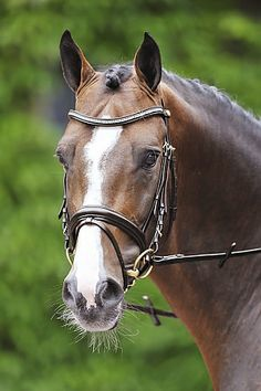 Exquisite Dressage bridle made of finest leather, curved browband with squared diamonds. All The Pretty Horses, Beautiful Horses, Dressage Bridle, Horse Face, Paris, Equestrian, Wild Animals, Diamonds, Athletic