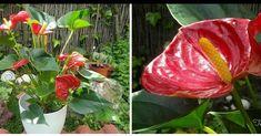 ¿La flor más bella para el interior de casa?