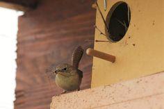 Aves de nuestro Chile